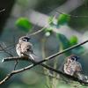 【野鳥】新潟 春の野鳥③