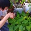 ★Campus Report★ ついに収穫のとき!