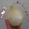 淡路島からお取り寄せした新玉ねぎを食べるよ【食べチョク】