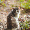 望遠レンズで見返り美猫