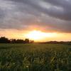 夕暮れ景色~その105『夕陽に染まる草原』