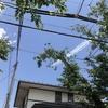 ブルーインパルスの世田谷上空飛行、2回も撮影できました(泣!!!