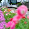 富山駅北フラワーロードを走る市内電車