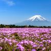 【一眼レフ】富士芝桜まつりに行ってきました。
