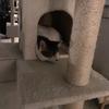 2月22日は正式なネコの日(ΦωΦ) キャットガーディアン大塚シェルターでネコ活してきました