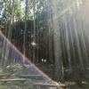 ささやまの森公園に行ってきた