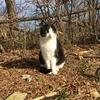 やっと新年一回目 摩耶山へと登って…猫を見て降りてくる。