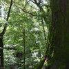 森林浴に。#神宮 おすすめ:☆☆☆☆☆ ~写真で届ける伊勢志摩観光~