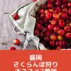 【盛岡】さくらんぼシーズン突入!今年のおすすめ2か所の果樹園を紹介します