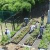 ブルーベリー苗木の施肥 イツハツ ブルーベリーの剪定7