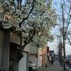 春のご近所徘徊