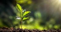 脳が働かない人は植物を育てるべき。「グリーンのすごさ」4つの科学的根拠