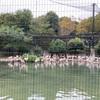 動物園ぼっち散策(3)