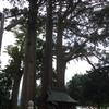 佐味神社の御神木