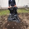 里芋の種芋植え