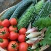 【名医のTHE太鼓判】糸島野菜は奇跡の大地で育まれた絶品!サラダえのきが気になる