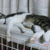 暖まる監視の往復おネコさま。