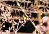 見ごろを迎えた梅の花!春の訪れを感じる桃太郎伝説ゆかりの【吉備津神社】