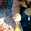 金魚を飼うために水の塩素を確実に抜く方法とは?