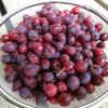 ジューンベリー収穫 ~その2~