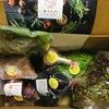 【レビュー】食べチョクで新鮮産直お野菜をお取り寄せしてみました