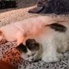 猫とハラスメント