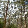 ペンバートンで53mの木登りに挑戦