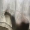 【愛猫日記】毎日アンヌさん#5