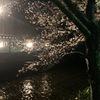祇園 炭火やきとり とり新&京都の祇園で夜桜を見るならココは外せない!おすすめスポット!