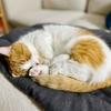 【愛猫家のレビュー】最高の癒しアニメ「ARIA」についてご紹介。