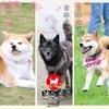 日本犬祭~NIPPON DOG's CARNIVAL 2018~中編