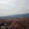 神奈川県「まつだ桜まつり」と「大桜ラーメン」を堪能