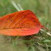 落ち葉の写真。