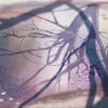 """【アニメ映画】新海誠監督作品:美麗な映像と、淡い""""距離""""の物語!『彼女と彼女の猫』から『君の名は。』、『天気の子』まで。"""