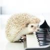 子育てに疲れた時に聞きたい音楽ーその2:ギルバート・オサリバン