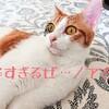 電源コードを噛みまくる(;O;)やんちゃな猫への対応を考えてみた