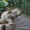 シンガポール動物園とナイトサファリ、リバーサファリのお得なチケット