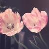 愛は与えるもの。先に与えなければ、受け取ることはできない