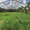 【畑】想いを手放す草刈りday  〜新しい始まりに向けて〜