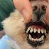 ハル前歯悪化😢