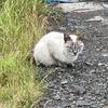 主人の北海道ネコ歩き