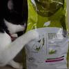 今日の黒猫モモ&白黒猫ナナの動画ー672