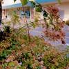 ★風に揺れる茎と花
