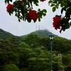 函館公園にて