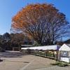 【神代植物公園 実体験レビュー(中編)】アクセス~園内の自然散策、自然観察まで、豊富な写真で紅葉の園内をご紹介