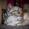 睡眠不足を解消したいなら、睡眠のスタートダッシュを改善しよう