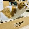 Amazonの段ボール爪研ぎキタ!5分も経たないうちに破壊…。そんな愛猫がわたしは大好きです!