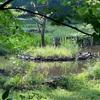 朝の散歩 緑地帯の中を 深呼吸して
