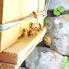 晩秋のミツバチ