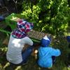 苗作り 種籾選別~播種~発芽